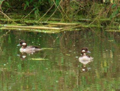 Secord Wetland