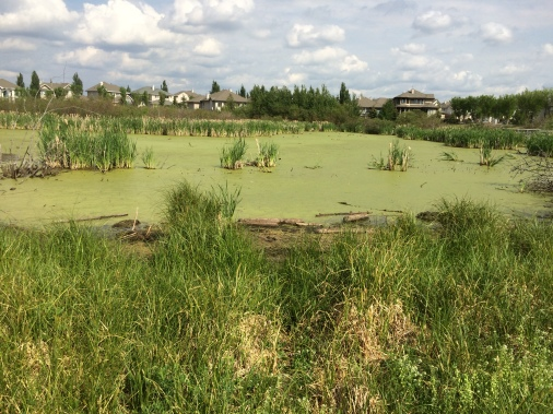 Hodgson Wetland
